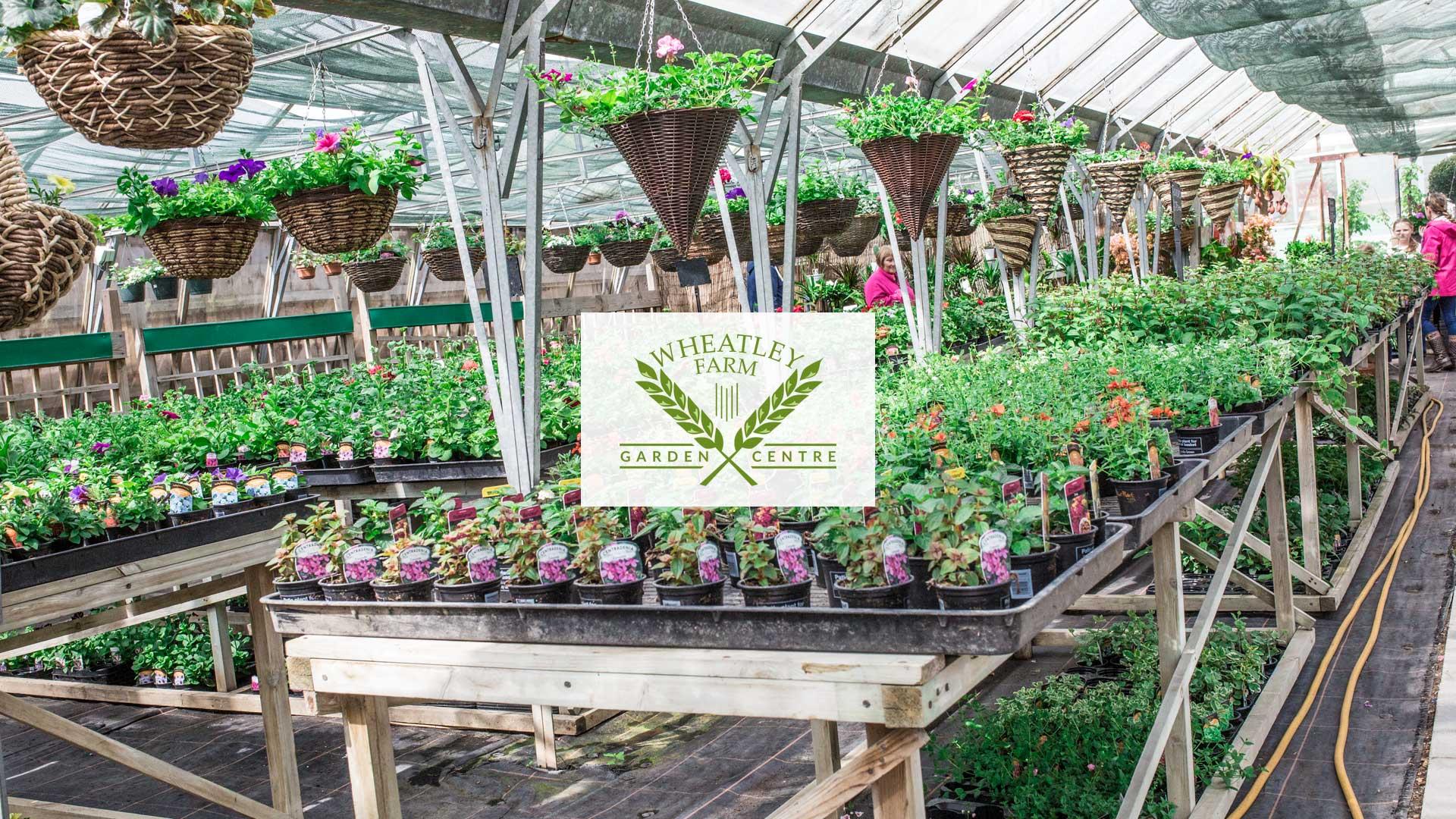 Garden center in es garden ftempo for Grace gardens waco tx