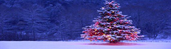 buy real christmas tree essex